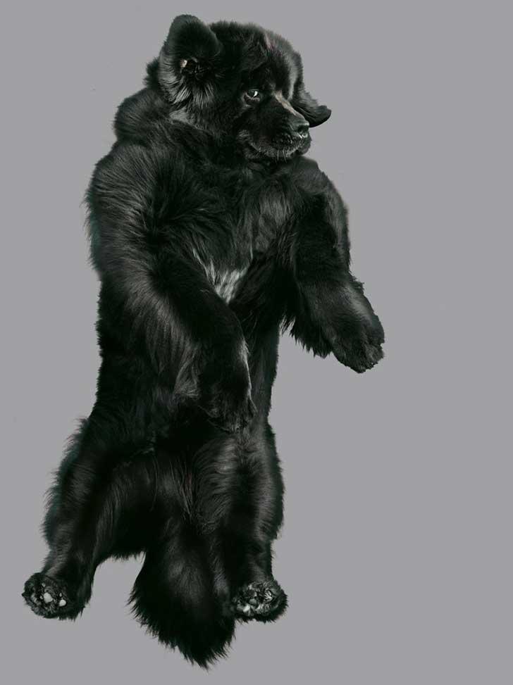 perro-cayendo-11