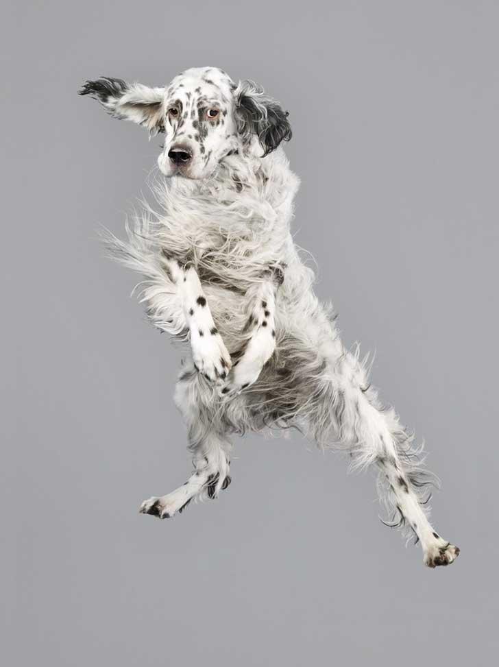 perro-cayendo-15