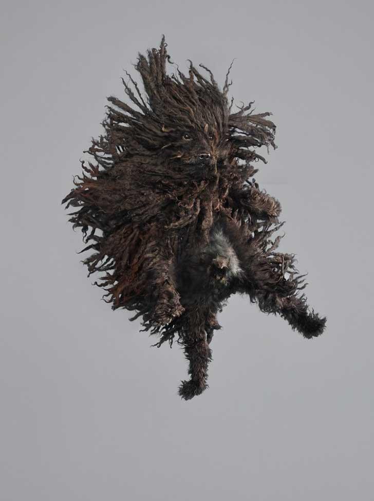perro-cayendo-2
