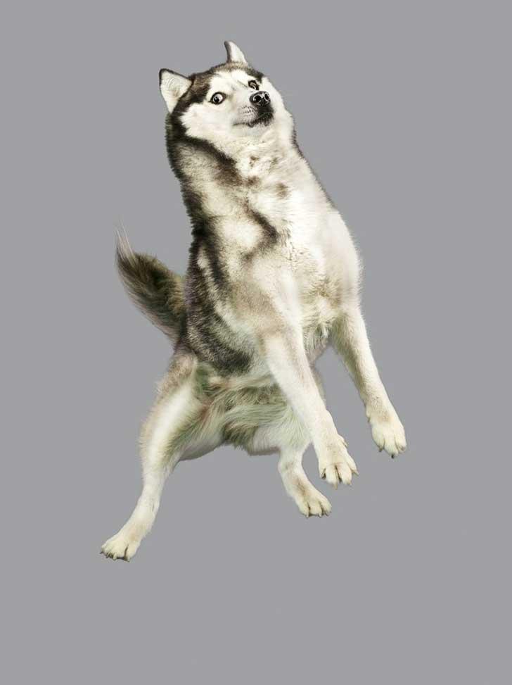 perro-cayendo-4