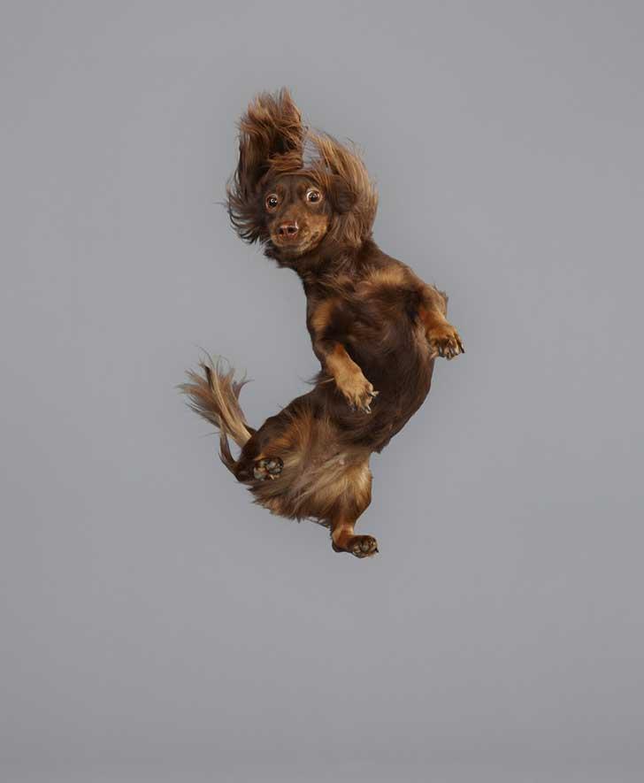 perro-cayendo-5