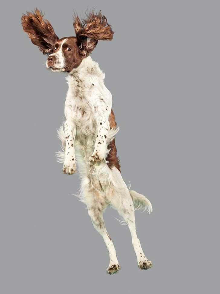 perro-cayendo-9