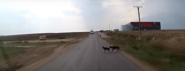 perro-salva-perro