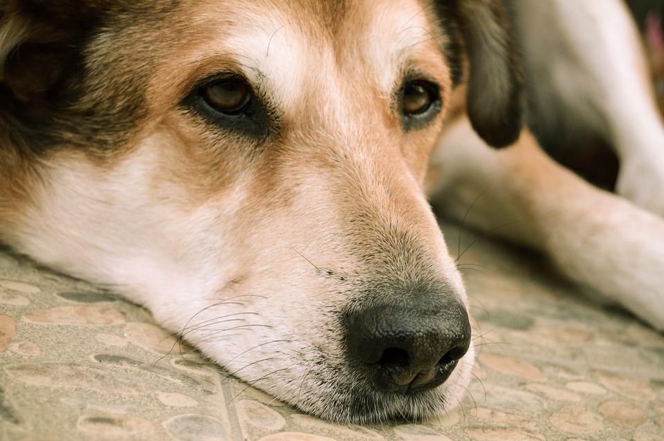 Bolivia ayuda a los perros abandonados de Rosario Salviani