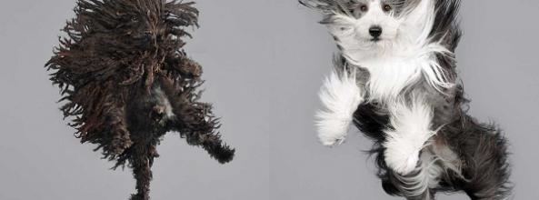 ¿Te imaginas la cara de tu perro cayendo en el aire?