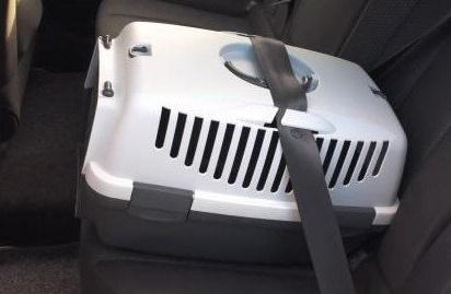 Transportín - Consejos para viajar en el coche con seguridad con nuestros perros