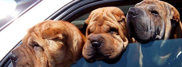 Julia Otero alerta de una infracción con perros en Twitter