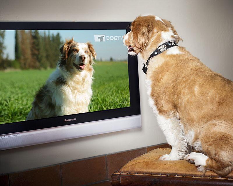 ¿Sabes que los perros lo pasan bien con la televisión?