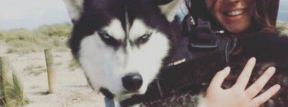 "Anuko, el perro famoso o ""Grumpy Dog"""