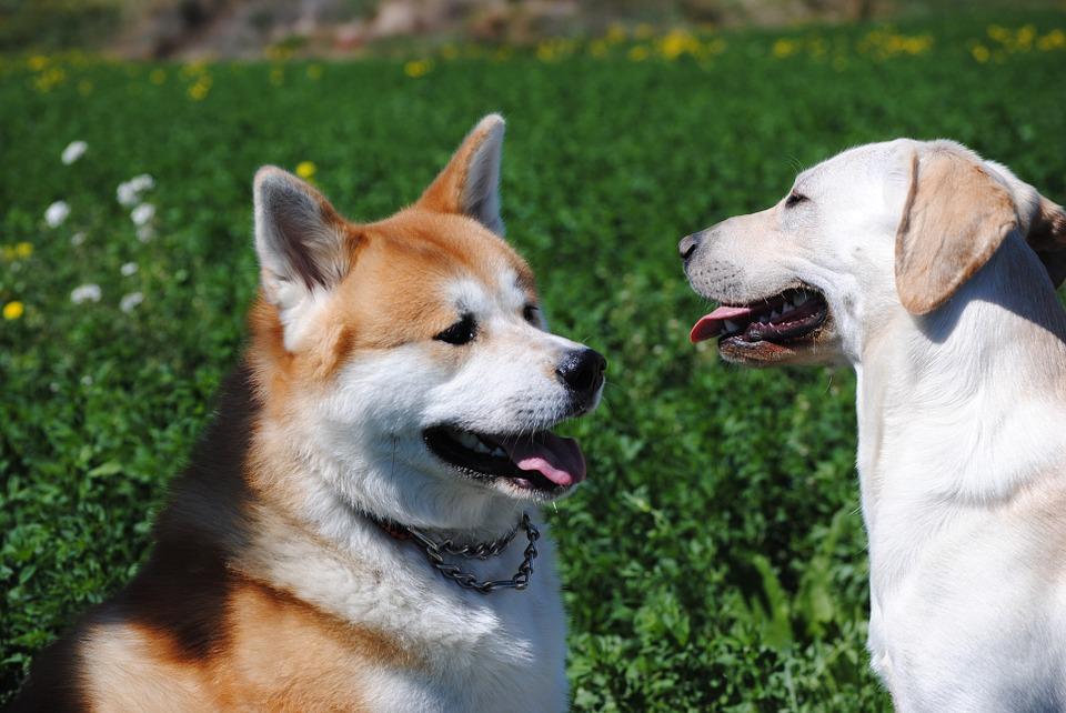 Descubre los hoteles para perros de Petit Palace