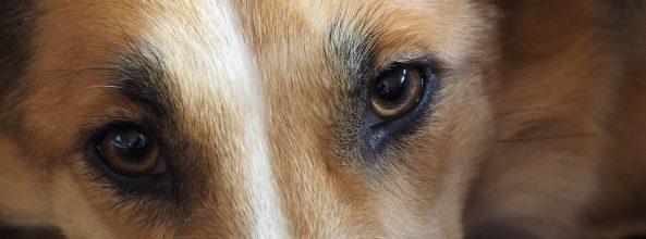 Desterrando mitos: los perros no ven en blanco y negro