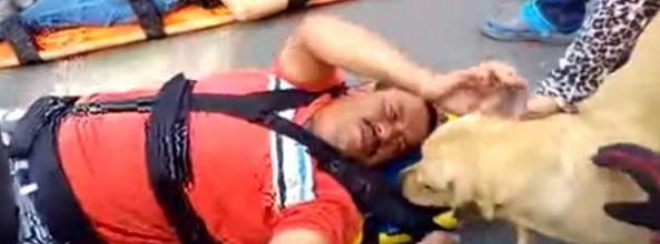 Perro socorre a su dueño en la escena del accidente