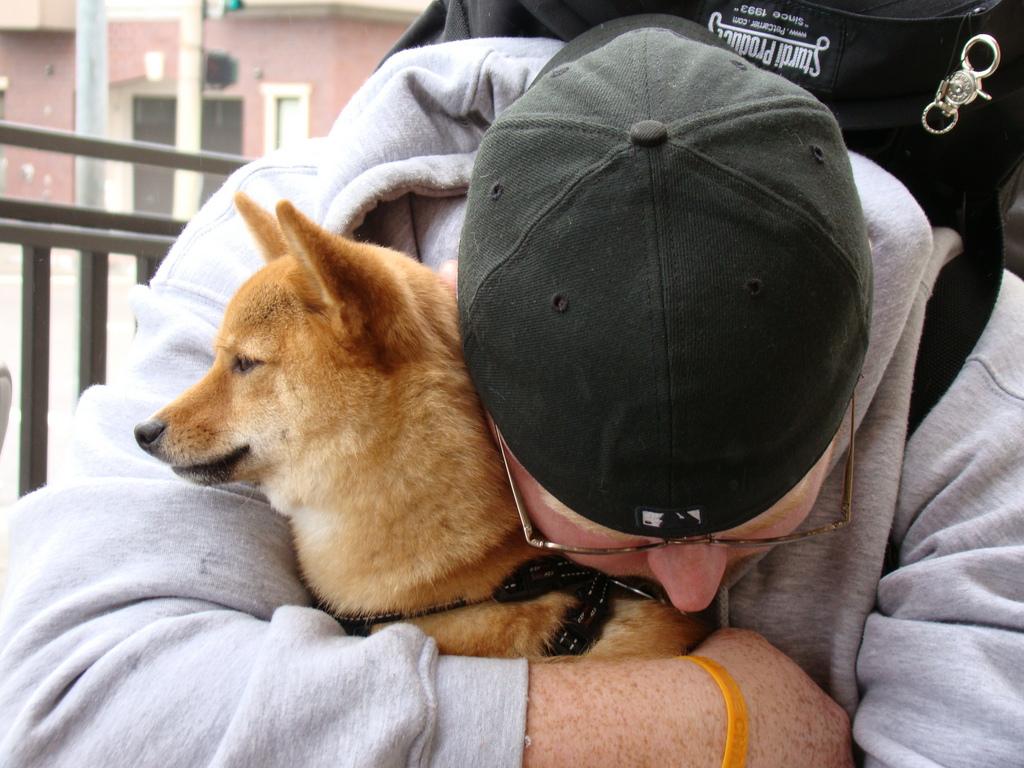 A los perros les gustan los halagos