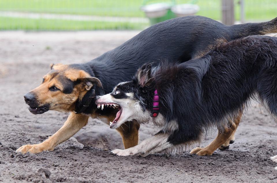Vacunas para perros contra la rabia, muy importantes.