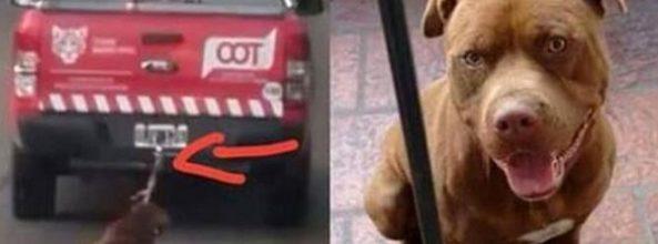 Funcionarios municipales atan a un Pitbull perdido a una camioneta y lo arrastran