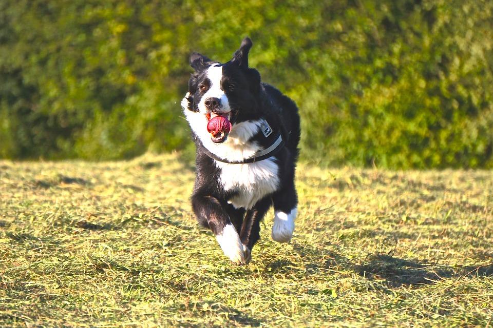 """Nace el nuevo concepto de perros """"Perunners"""""""