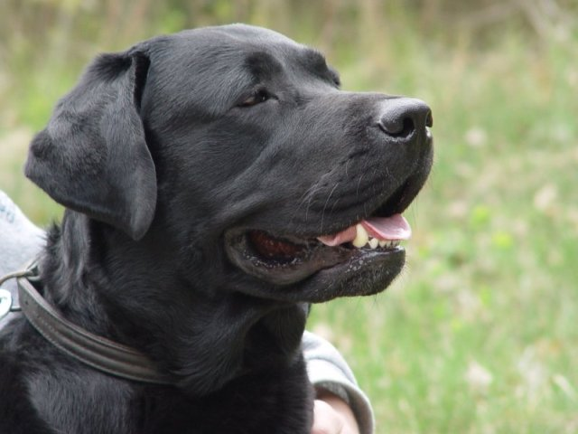 URL, el perro que ayuda a luchar contra la pederastia