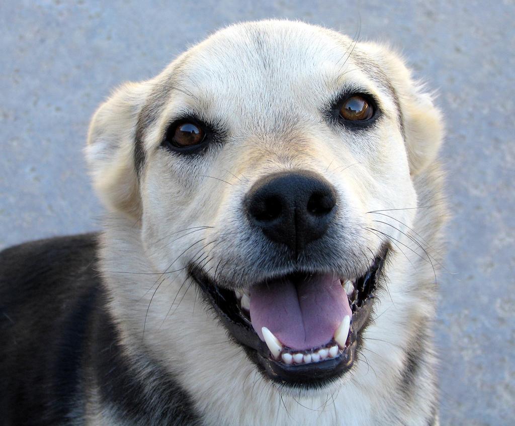 Tatuajes para ayudar a perros sin hogar
