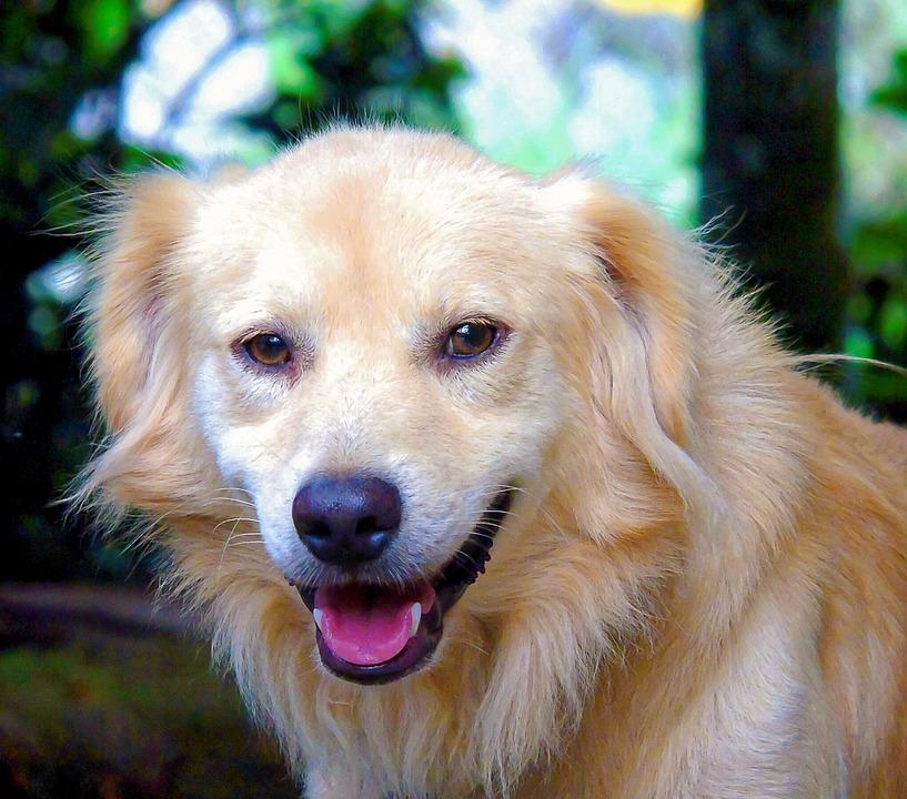 Secretos del olfato de los perros