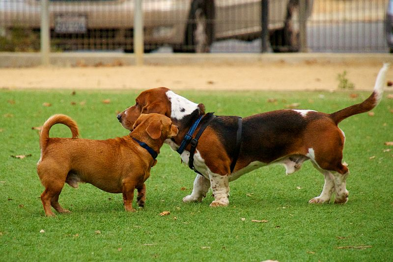 Abren un nuevo parque de perros en Ceuta