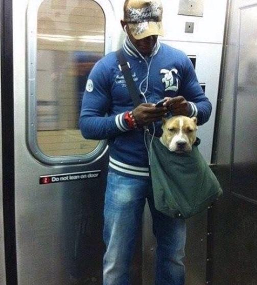 perros-bolsas-metro-ny-1