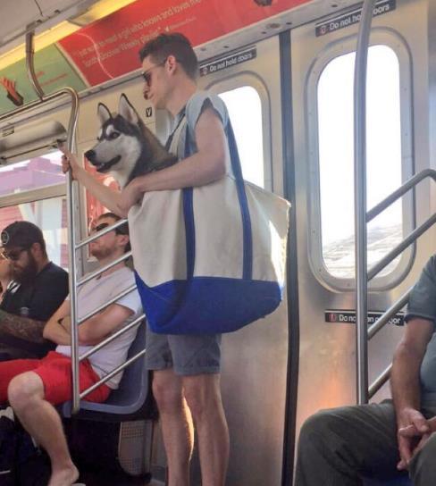 perros-bolsas-metro-ny-11