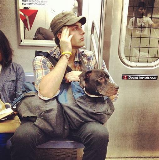 perros-bolsas-metro-ny-12