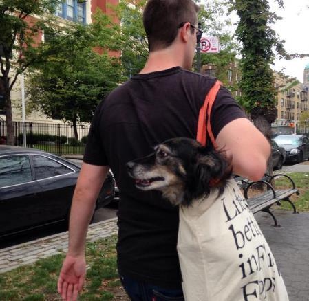 perros-bolsas-metro-ny-13