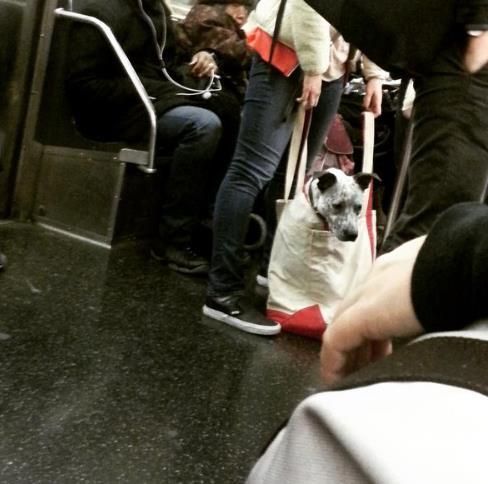 perros-bolsas-metro-ny-14