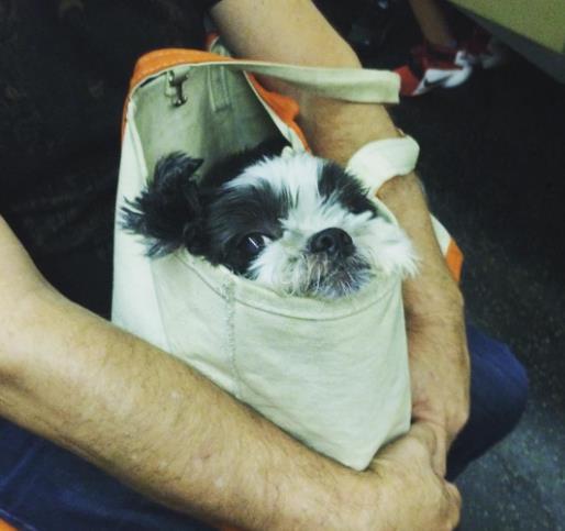 perros-bolsas-metro-ny-15