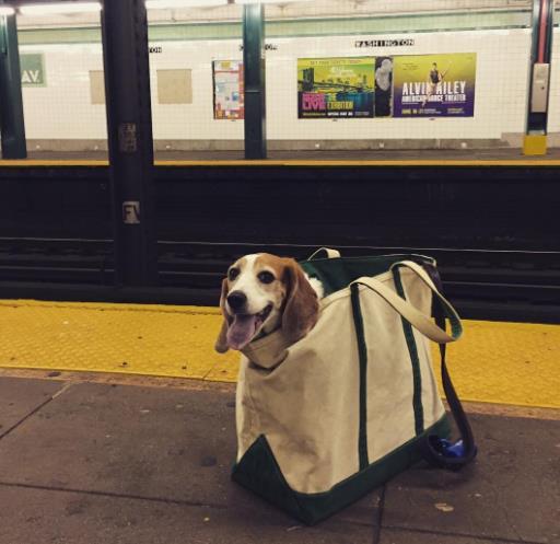 perros-bolsas-metro-ny-16