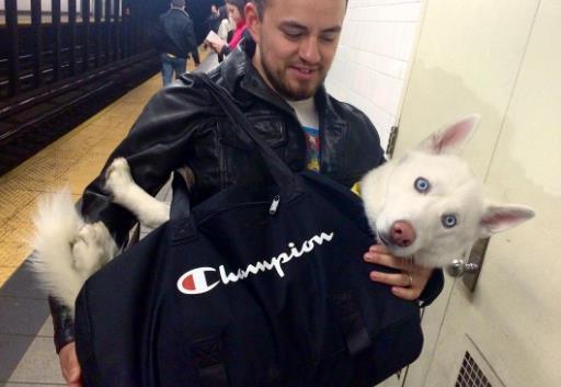 perros-bolsas-metro-ny-2