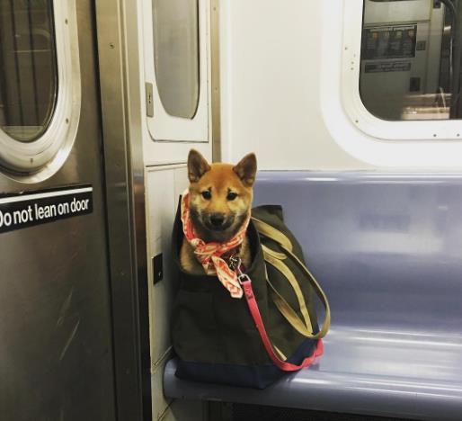 perros-bolsas-metro-ny-3
