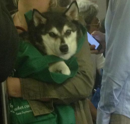 perros-bolsas-metro-ny-4