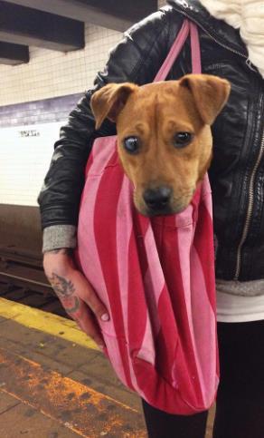 perros-bolsas-metro-ny-5