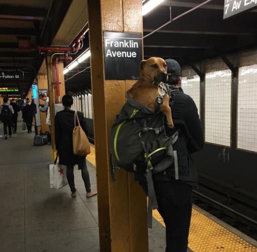 perros-bolsas-metro-ny-6