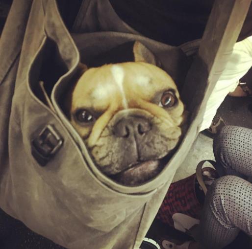 perros-bolsas-metro-ny-8