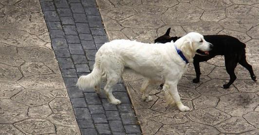 perros-coche