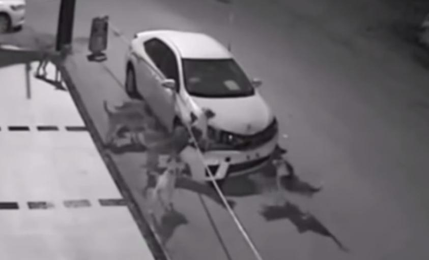 Virales de perros: perros destrozan un vehículo en Turquía