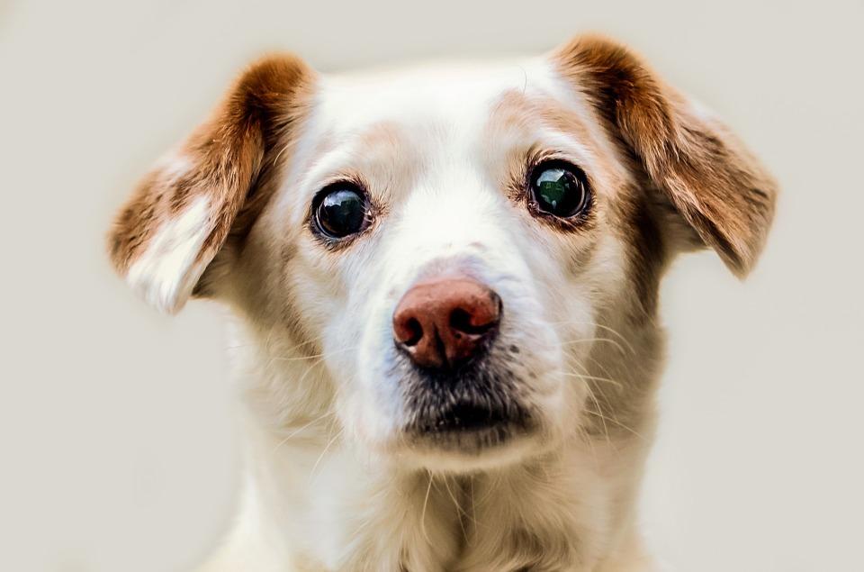 En Madrid roban las bolsas para excrementos de perros