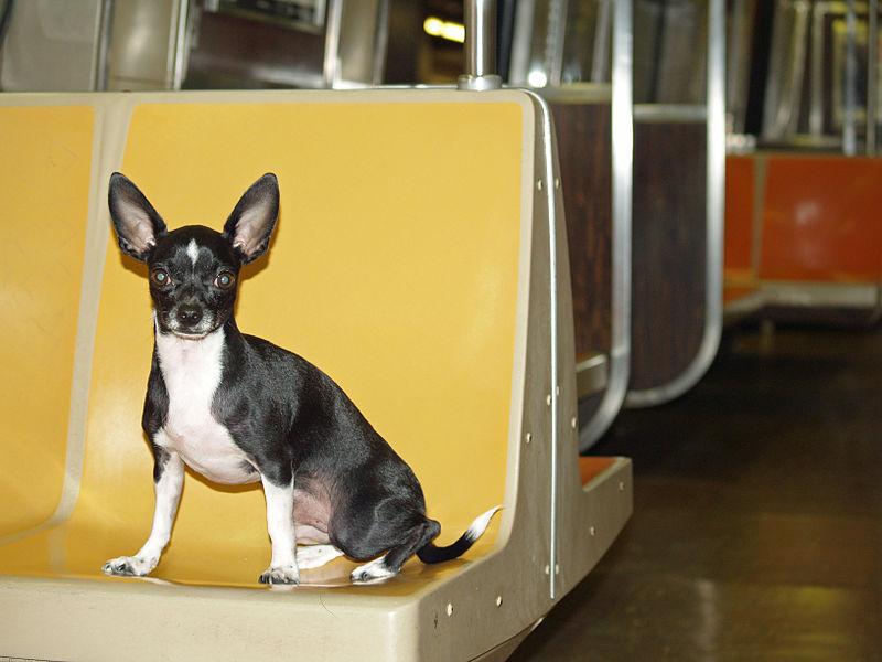 Cada día pasan 370 perros por el Metro de Madrid