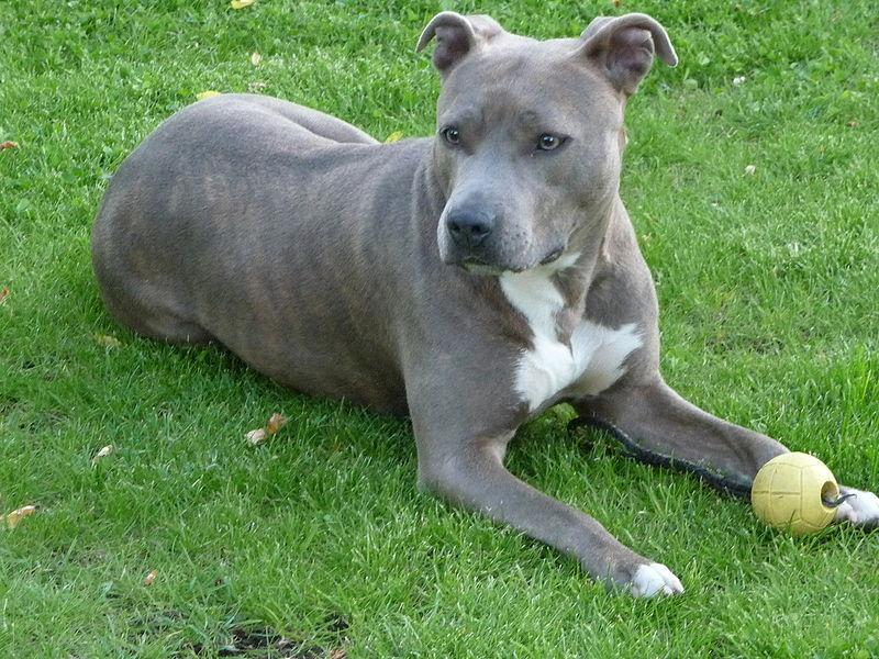 Fallece un hombre atacado por perros