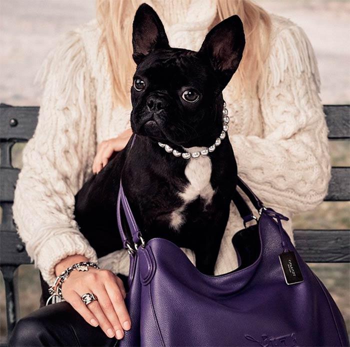 Escritores y famosos que aman o amaron a los perros