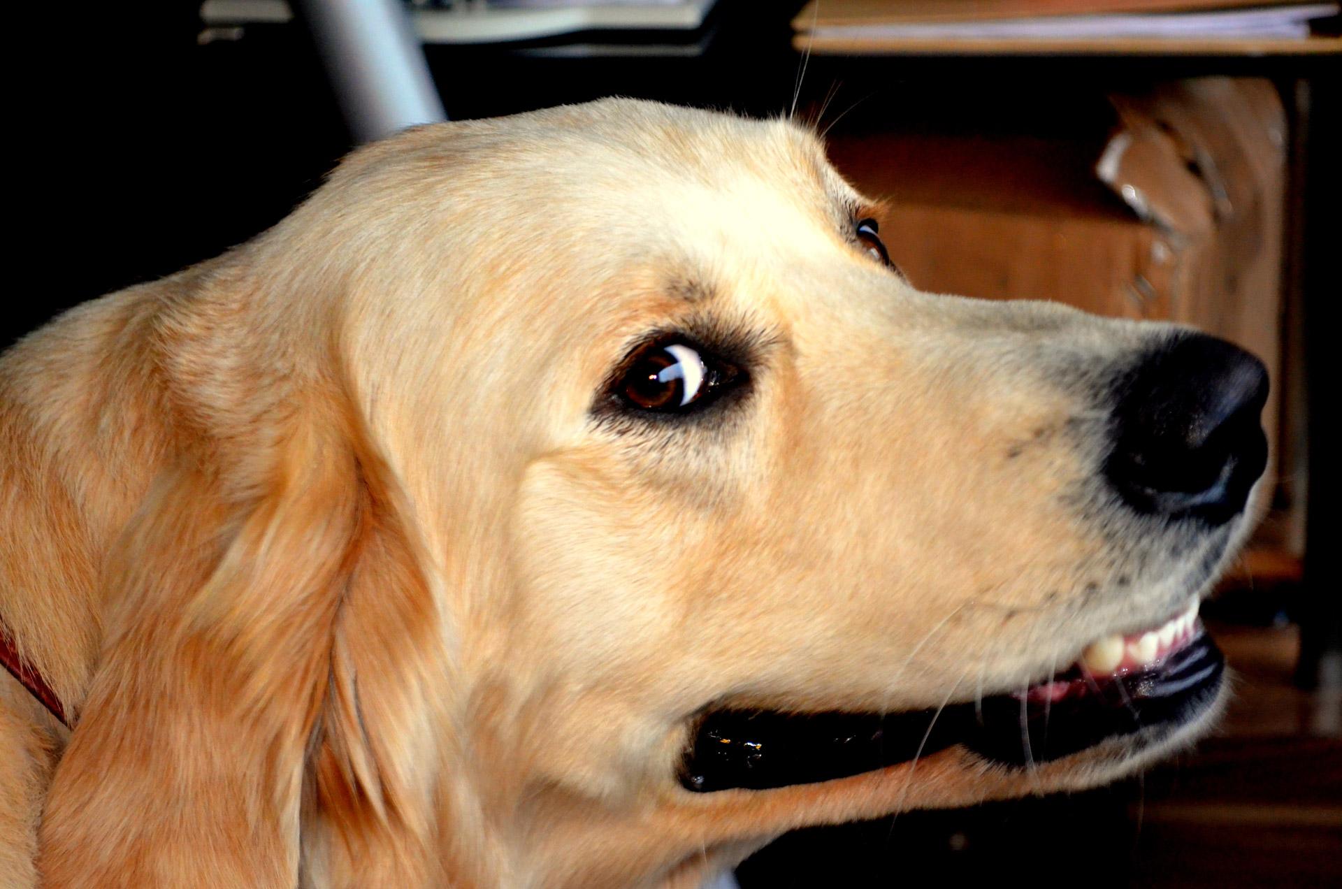 "Llega a pantallas ""Amores Perros"""