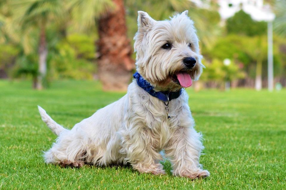 Aparecen nuevos estudios acerca de la memoria de los perros