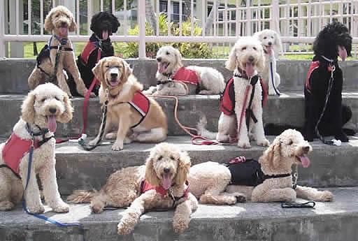 Una pareja mantiene a 276 perros en su hogar