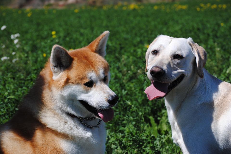 26 perros esperan a ser adoptados