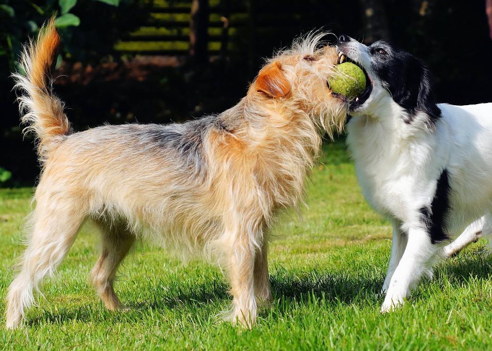 ¿Sabes qué hay diferentes tipos de dueños de perros?