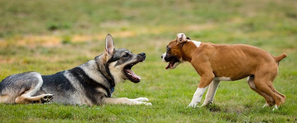 La agresividad la crean los humanos no las razas