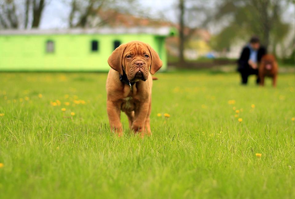 Se hará un evento solidario para perros en Tarragona
